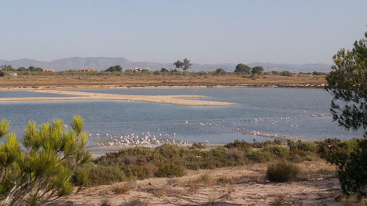 Oiseaux au parc naturel las salinas